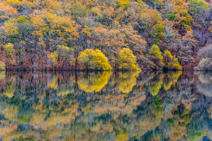 Reflejos nas Fragas do Eume